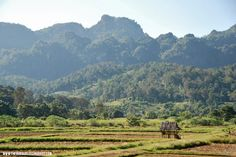 Thailand Travel Tips l Soppong Rice Fields, Motorbiking the Mae Hong Son Loop in Northern Thailand (A Backpacker's Travel Guide) l @tbproject