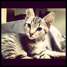 Our little Tabby Cat Miley