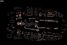 Des fragments d'os sont disposés avec des parties du squelette de l'Homo naledi, au milieu de centaines d'autres éléments fossiles, lors de l'annonce de sa découverte (10/09/2015). L'Homo naledi pourrait avoir vécu il y a 2,5 à 2,8 millions d'années. Principales différences cependant avec l'homme moderne : l'Homo naledi était caractérisé par un petit cerveau, environ la taille d'une orange moyenne, et la partie supérieure de son corps était plus proche du groupe pré-humain des…