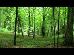 MYHAPPYMIND lasten mielikuvarentoutus - YouTube World Environment Day, Forest Landscape, Sustainability, Wildlife, Relax, Mindfulness, Let It Be, Education, Youtube