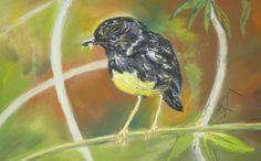 NZ bush robin pastel pinned from www.isabelfernandesday-art.weebly.com