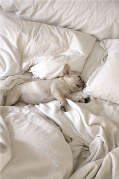 Sleeping puppy genius.