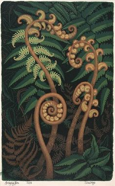 Springing Fern by Eileen Mayo 1983 Painting Inspiration, Art Inspo, Illustrations, Illustration Art, New Zealand Art, Guache, Botanical Prints, Painting Techniques, Art Reference