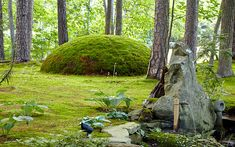 Marvelous moss garden: Discover David Spain's marvelous moss garden and see how he utilizes different types throughout his garden whether it be to replace turf or add to containers. Garden Plant Stand, Bog Garden, Shade Garden Plants, Dream Garden, Planting Succulents, Cacti Garden, Succulent Planters, Plant Stands, Air Plants