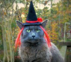 Garnet Red Cat Costume