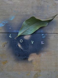 Color photograph of the word love. Between the letter L and the letter O, a ficus leaf.