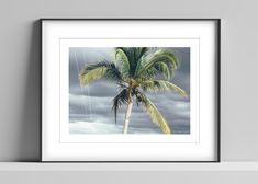 Limited edition signed photographic print by Anna Partington - 'Palm in Cienfuegos' - A palm tree and a stormy sky Cuba Cienfuegos, Pink Rose Flower, Black Leaves, Trees To Plant, Palm Trees, Cuba, Sky, Artist, Prints