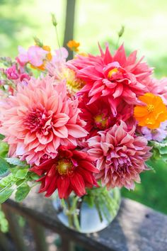 September Dahlias | Melissa Peterson