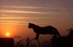 GOOD NIGHT......
