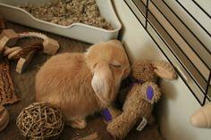 bunny + bunny