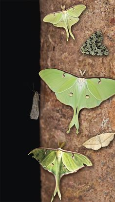 Sugaring For Moths | U.S. Kids Definitely Will Do This With Niko Next  Summer!