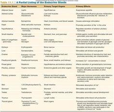 Biology Corner Endocrine system resources | Sports massage ...