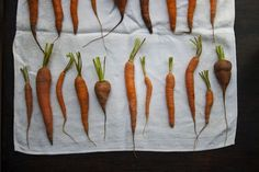 Garden carrots, in all their glory; photo via Today You Inspired Me.
