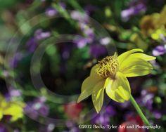Yellow and Purple Flowers Fine Art Photo Print by BeckyTylerArt, $20.00