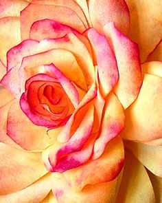 coffee filter rose diy from martha