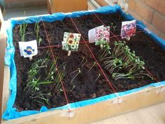 Zaaitafel! Wel even plastic in de zandtafel doen :) Classroom Projects, Classroom Ideas, Preschool Garden, Primary School Teacher, Spring Theme, Maria Montessori, Too Cool For School, Farm Gardens, Plantation