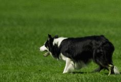 How to Train a Dog to Herd
