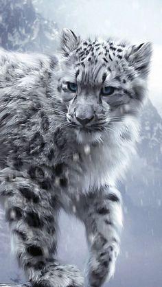 White Snow Leopards Amazing World beautiful amazing