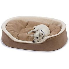petco oval tan and cream lounger dog bed ** read more at the image