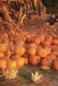 Pumpkin Growing Tips —