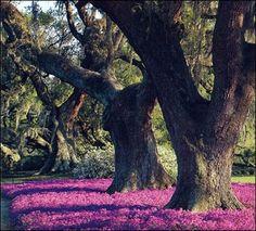 Rip Van Winkle Gardens | New Iberia, Louisiana
