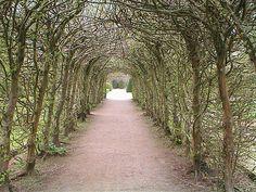 St Fagan's Castle Hornbeam Arch. St Fagan is a late 16th century Manor House near Cardiff, Wales.