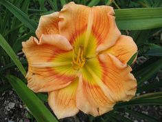 Marvelous 50+ Beautiful Daylily Garden https://decoratoo.com/2017/07/10/50-beautiful-daylily-garden/ Examine the rear of the bags and it'll explain to you how much to apply to every plant. Know which one which you want while looking for a new plant. If you prefer a simple evergreen plant try foxtail fern.