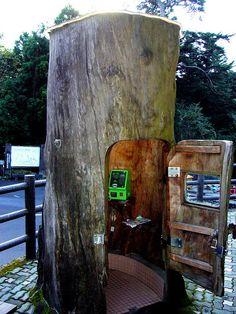 Tree phone booth