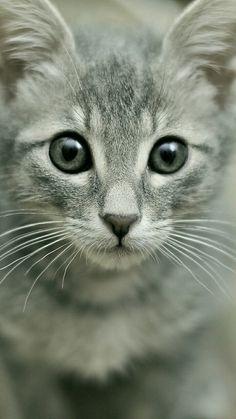 Make your pet look beautiful.. https://www.marshallspetzone.com/40-grooming