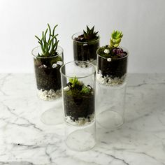 The holidays are approaching and we have gifts on the mind; and not just gifts, but modern gifts with a personal touch. Enter the DIY modern terrarium. Modern Lighting, Terrarium, Landscape Design, Bloom, Projects, Diy, Gardening, Architecture, Home Decor