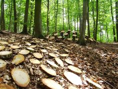 Ticks ... germany forest art path - Chen Sai Hua Kuan @ Sai Hua Kuan