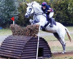 This 16.1hh 13-year-old grey #IrishSportHorse mare could be the perfect junior #eventer for you   For sale on #HorseDeals