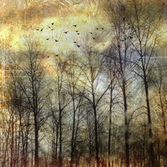 An beautiful photo by Anne Yungwirth, a tender song by Geometric Shapes and a few words from me http://estherhizsa.wordpress.com/2014/01/03/free-as-a-bird/