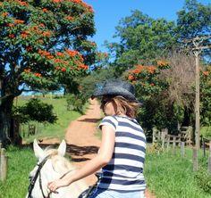 Fotografia tirada no campo. Flamboyant - cavalo