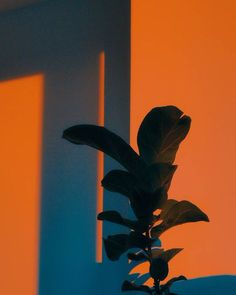 Creative, Minimalist and Cinematic Photography by Monty Kaplan Orange Aesthetic, Aesthetic Colors, Aesthetic Photo, Aesthetic Pictures, Cinematic Photography, Art Photography, Colourful Photography, Photography Magazine, Photography Backdrops