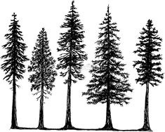 Fir tree tattoo arm ideas for 2019 Tree Silhouette Tattoo, Pine Tree Silhouette, Forest Silhouette, Silhouette Design, Tree Tattoo Arm, Pine Tree Tattoo, Forest Tattoos, Nature Tattoos, Natur Tattoo Arm