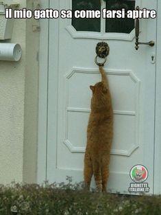Bussare da gatto  #Animali, #Gatti