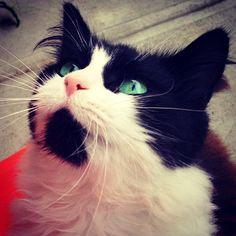 This is Lani. People say she has ocean eyes.