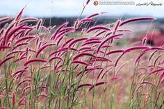 IMG 45131 - hình ảnh đẹp về Gia Lai - miền cao nguyên nắng gió