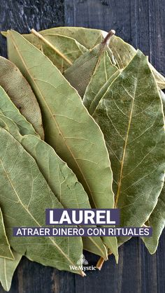 Know how to attract money with bay leaves, an ancestral ritual that could bring you happiness. Herbs For Protection, Feng Shui And Money, Money Prayer, Money Spells That Work, Fen Shui, Witchcraft Spell Books, Wiccan Magic, Money Magic, Herbal Magic