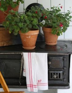 Guider, Grupp, Planter Pots, Cottage, Cottages, Cabin, Plant Pots, Mitragyna Speciosa