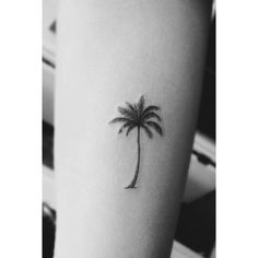 palm tree • physical or spiritual paradise