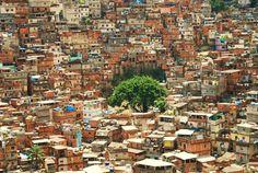 Eis que uma árvore humaniza a favela....!