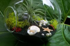 Air plant terrarium with mosses.This air plant display idea always stands out.
