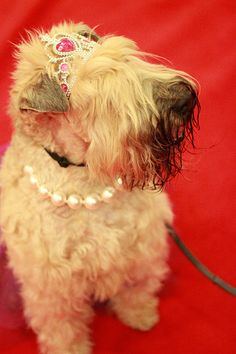 Love the pearls, darling! Up Dog, What Dogs, Dog Wear, Cool Pets, Animal Design, High Tea, Dog Lovers, Magazine, Pearls