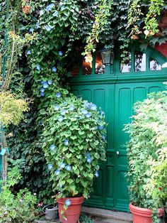 Vines growing on the house from Monet's Garden in Giverny, France.