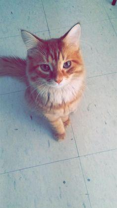Lost Cat - Tabby - Hamilton, ON, Canada L8K 5H6
