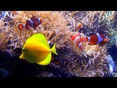 "Aquarium's with Natural Wave Sounds 60mins ""Sleep Sounds"""