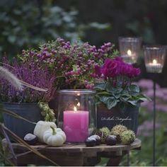 #Autumn #autumdecor #autumnflorals #gardensdecor #countrystilllife #gardenlovers #fallcolors #flowers #instaflowers credit @daniela_behr_fotogalerie