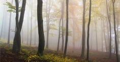 5 astuces pour photographier le brouillard